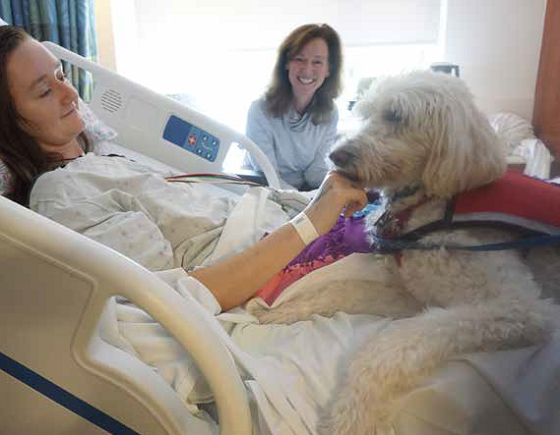 mac the therapy dog visiting a patient